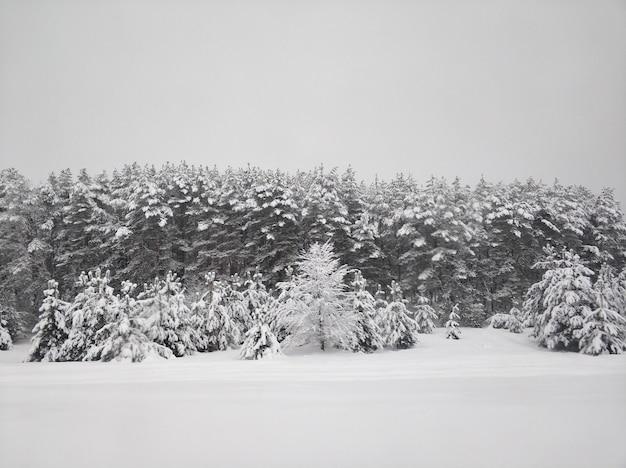 Зимний пейзаж. зимняя лестница покрыта белым снегом. деревья в снегу.