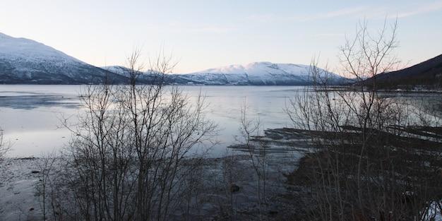 Зимний пейзаж с рекой и соснами, снегопад