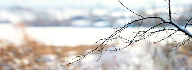 雪に覆われた川を背景に雪に覆われた木の枝のある冬の風景。冬の日