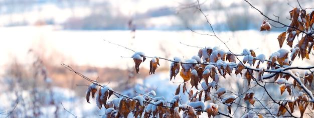 晴天時の川の背景に雪に覆われた木の枝のある冬の風景
