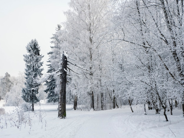 Winter landscape with a broken pine tree and a snow-covered road through the forest.