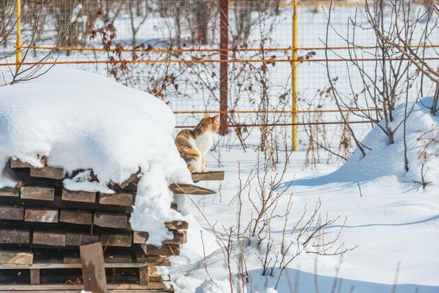 Зимний пейзаж с кошкой на снегу