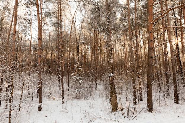 겨울철에 흰 눈과 서리로 덮여 다른 종류의 나무가있는 겨울 풍경, 폭설 후 서리가 내린 날