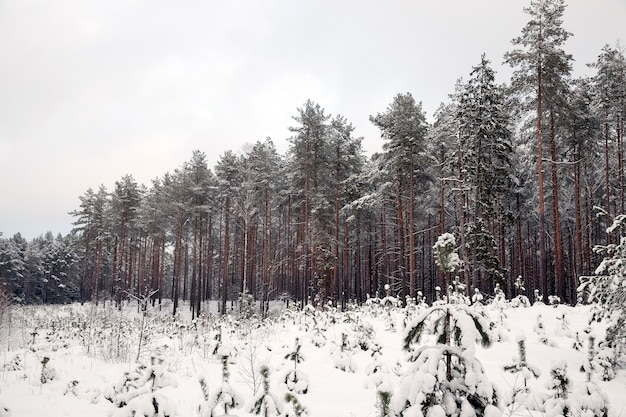 さまざまな種類の木がある冬の風景