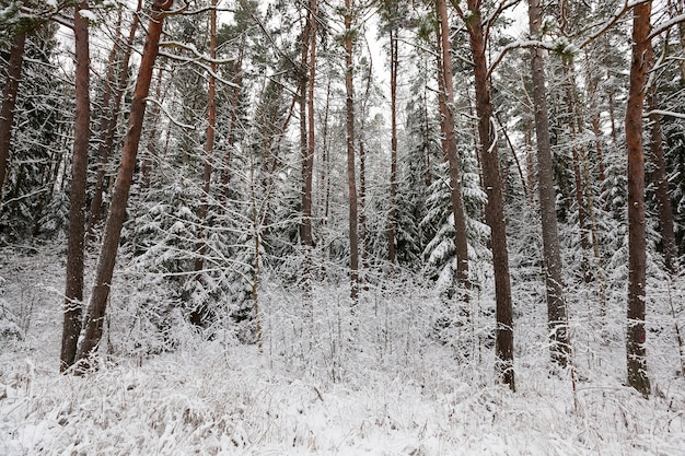 Winter landscape with different types of trees