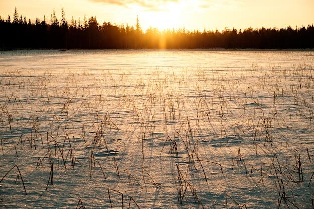 Зимний пейзаж с сухим замерзшим кустом