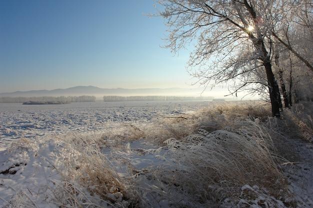 フィールドと森のある冬の風景