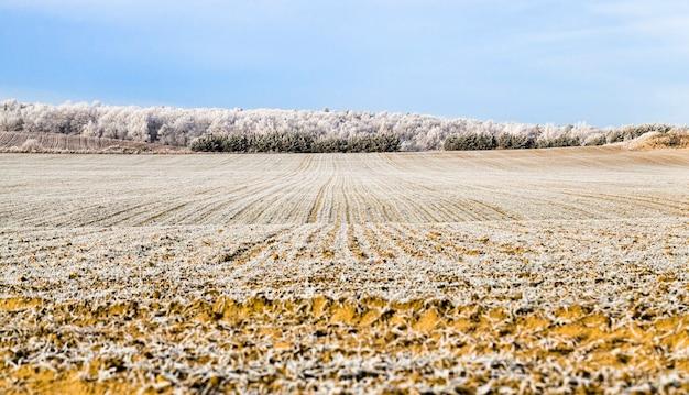 Зимний пейзаж с полем и лесом