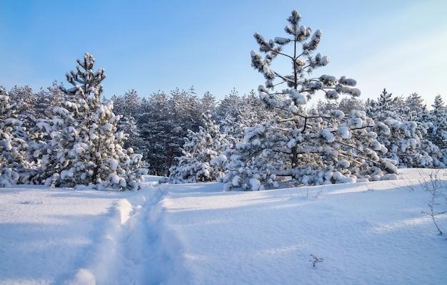 전나무와도 겨울 풍경입니다. 자연의 구성.