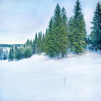 Зимний пейзаж с зайцем
