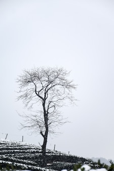 Winter landscape with leafless tree