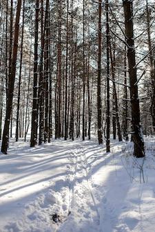 松林と雪道、冬のロマンチックな晴れた日、背景と冬の風景