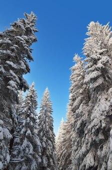 青い空を背景に松林と冬の風景