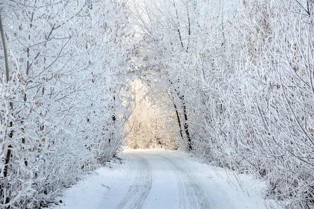 Winter landscape with road under bow of snow covered trees