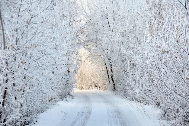 Зимний пейзаж с дорогой под луком заснеженных деревьев