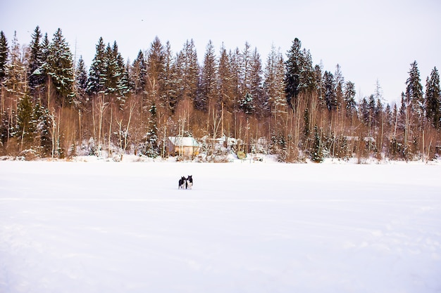 Winter landscape with a small house in the forest
