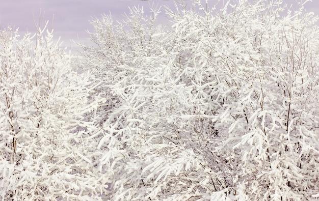 Зимний пейзаж со снегом и деревьями, ветки деревьев в снегу, зимняя сказка