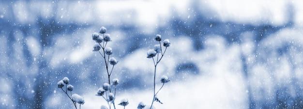 白と青の色調の降雪時にぼやけた背景に雪に覆われた乾燥した植物と冬の風景。冬の降雪