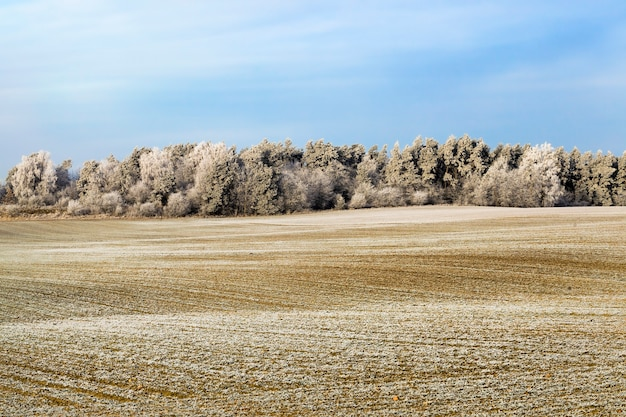 Зимний пейзаж со заснеженным полем и смешанным лесом с лиственными и хвойными деревьями после снегопада и мороза