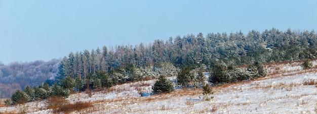 晴天、パノラマの冬の森の雪に覆われたトウヒと冬の風景