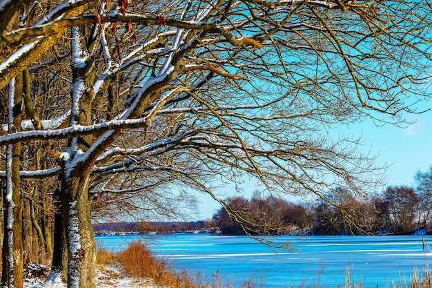 晴れた日の川沿いの雪に覆われた木々と冬の風景