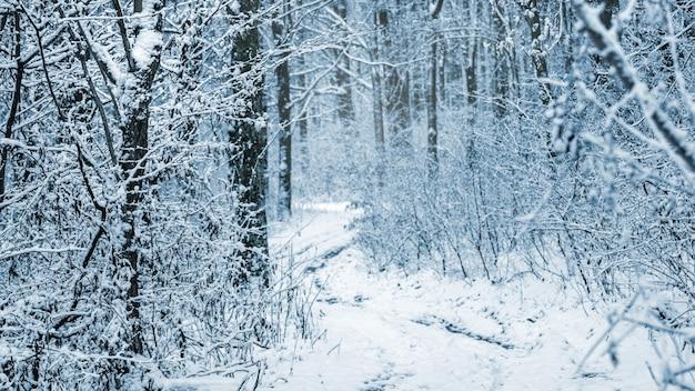 鬱蒼とした森の中の雪に覆われた木々のある冬の風景