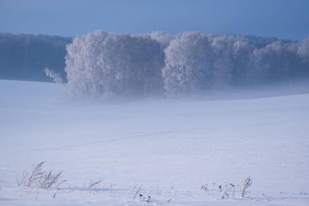晴れた日に霧の中で雪に覆われた木々と冬の風景