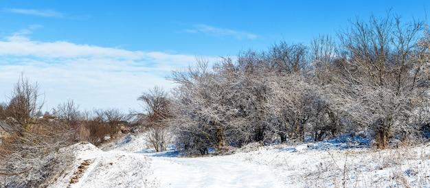 Зимний пейзаж с заснеженными деревьями в солнечную погоду и голубое небо с белыми облаками
