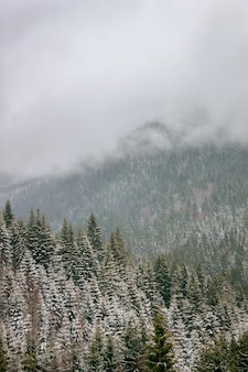Зимний пейзаж с заснеженными деревьями в карпатах.