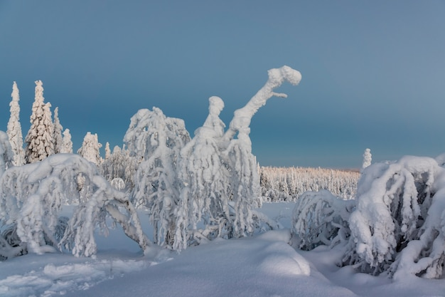 Winter landscape with snow covered trees in winter forest