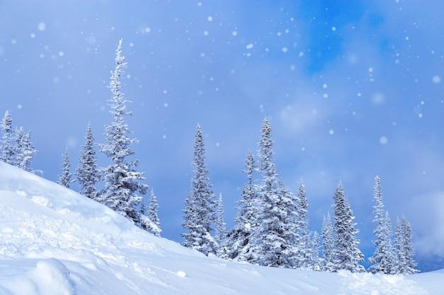 雪が降る木々と青い空と冬の風景ロシアシベリアのシェレゲシュスキーリゾート
