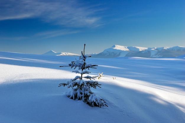 산 carpathians, 우크라이나에 눈이 겨울 풍경