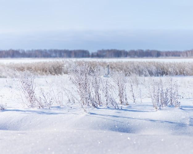 雪に覆われたフィールドと霜の白い雪と青い空の草のある冬の風景は太陽の下で輝きます
