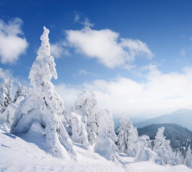 降雪後の晴れた凍るような日に山に雪のモミの木がある冬の風景