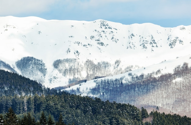 晴れた日の山の高い雪に覆われた森のある冬の風景。