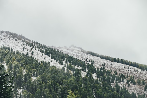 Winter landscape with snowy mountain with coniferous forest and pointy pinnacle with trees on top in haze. atmospheric alpine scenery with firs on hillside. spruces on snow mountain and sharp rocks.