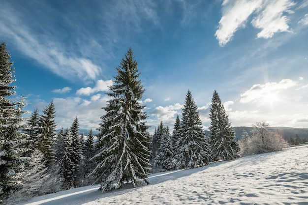 Winter landscape with snowy sunny forest