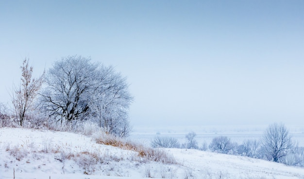 雪に覆われた木々と青い空のある冬の風景_