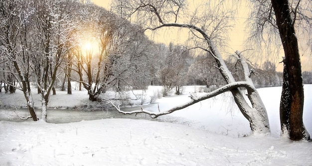 Зимний пейзаж с заснеженными деревьями и желтым солнечным небом