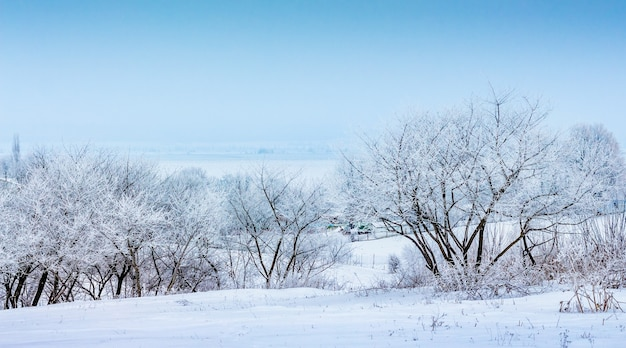 Зимний пейзаж с заснеженными деревьями на фоне голубого неба.