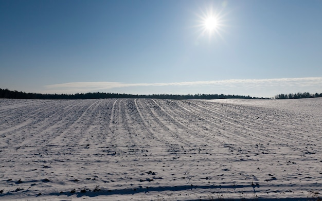 Winter landscape with the sun in the sky but the flowers of the agricultural field