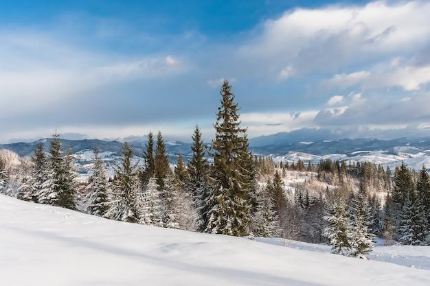 나무와 산 겨울 풍경