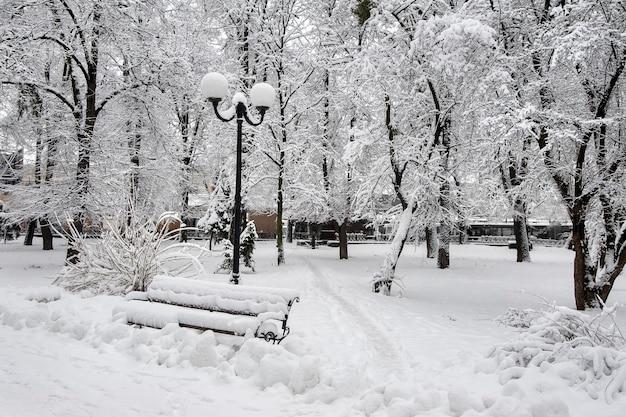 Зимний пейзаж с деревьями и снегом в городском парке. деревья ковы
