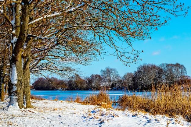 Зимний пейзаж с деревьями у реки в солнечную погоду