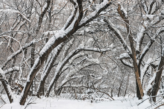 Winter landscape with trees covered snow