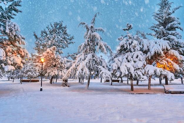 雪に覆われた公園の木々のある冬景色