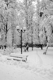 Winter landscape with trees and snow in city park. trees are cov