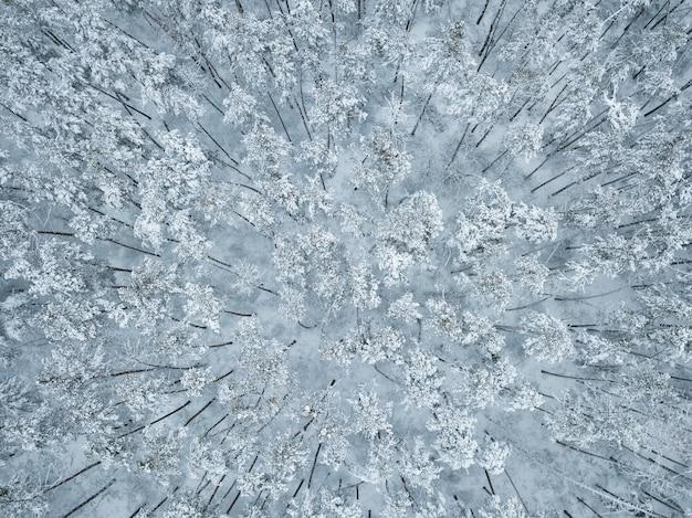 Зимний пейзаж с белым лесом. деревья, покрытые снегом, вид с воздуха