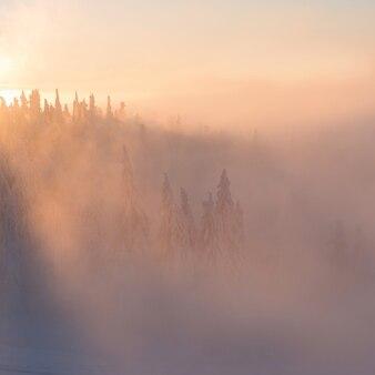 안개와 눈 덮인 나무와 태양 광선으로 카 르 파 티아 산맥의 겨울 풍경