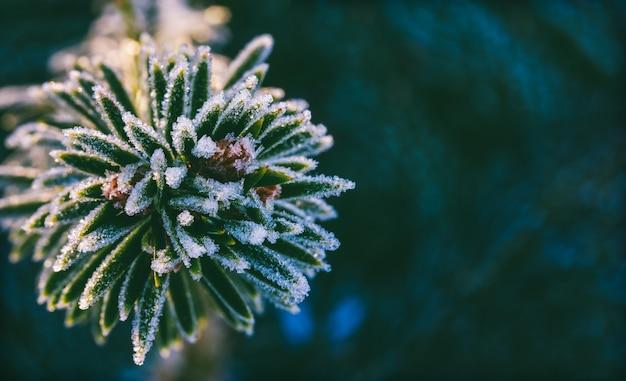 コピースペースのある氷の結晶の冬のマクロトウヒの枝